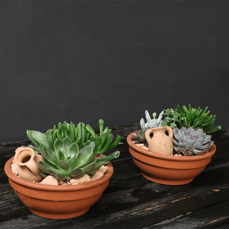 Two pre planted succulent gardens