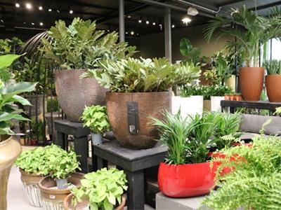 garden centre pots and plants