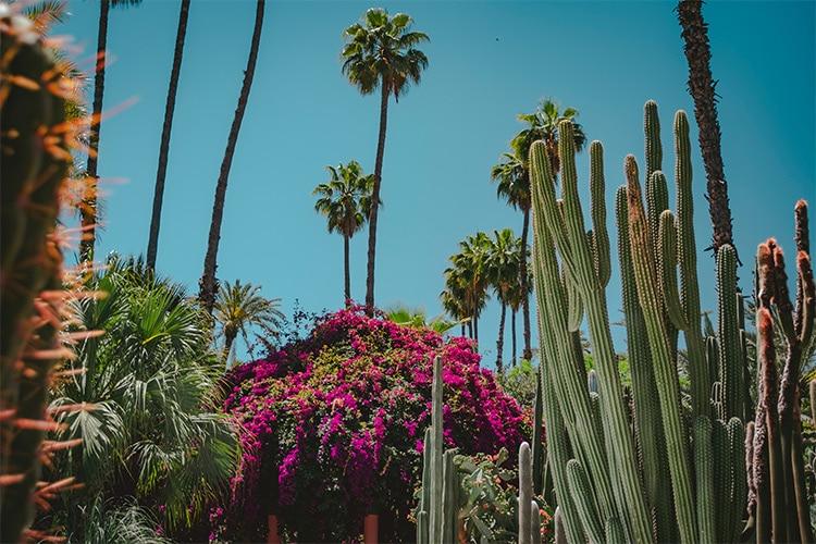 Cactus - Big Garden Cactus Garden