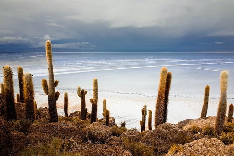 Desert Garden with beach in the back ground