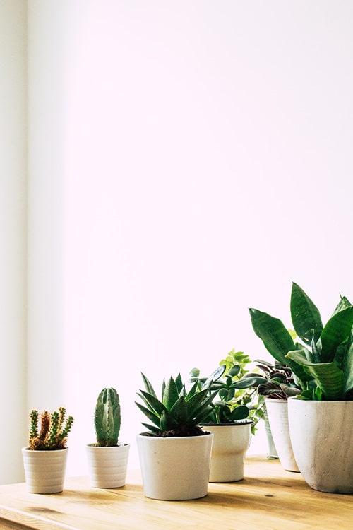 Indoor cactus garden