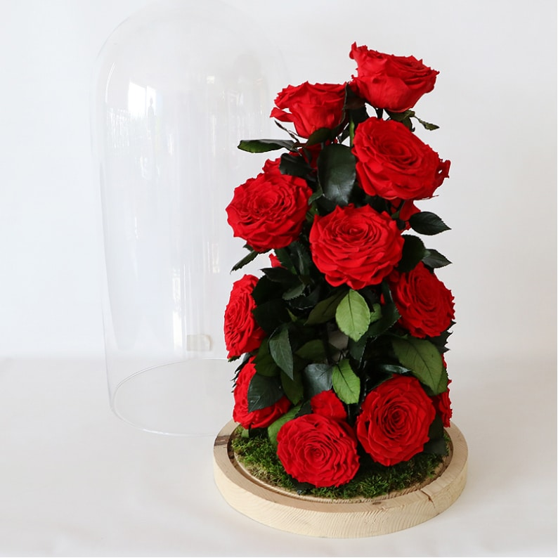 rose amor long lasting red roses in glass dome vase