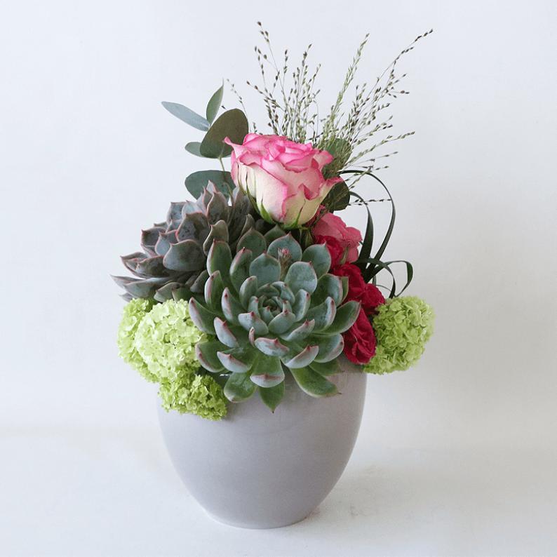 succulent, pink rose, snowball in a grey pot
