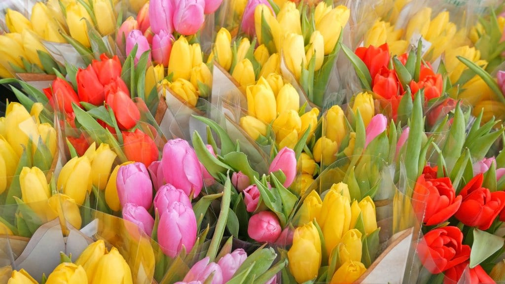 Colourful tulips in a flower shop