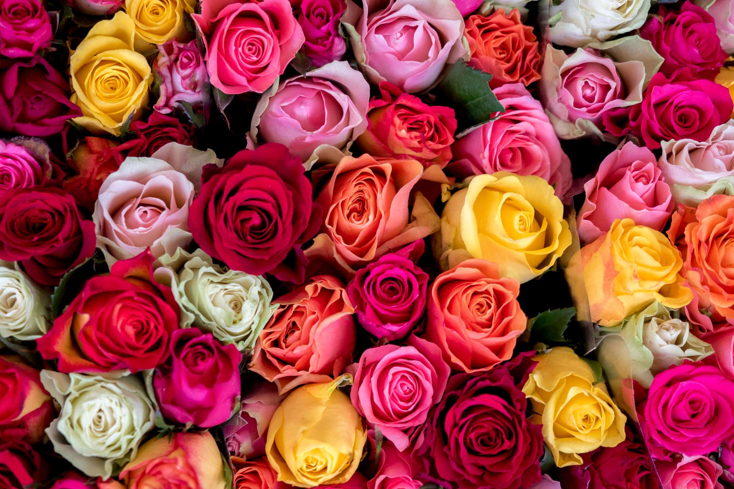 Roses in a large colourful bouquet