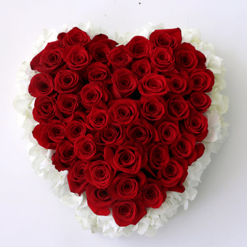 red roses surrounded by white hydrangea in a heart