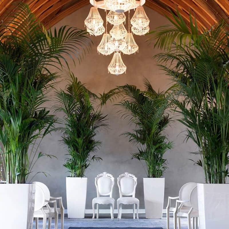 tall palms around bridal ceremony white chairs
