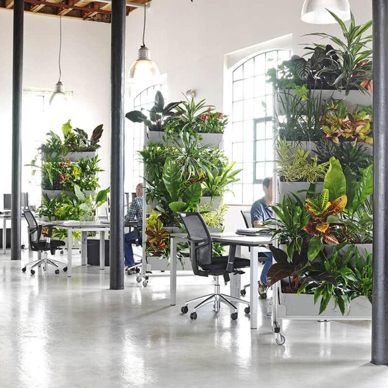 office plants arranged in an office