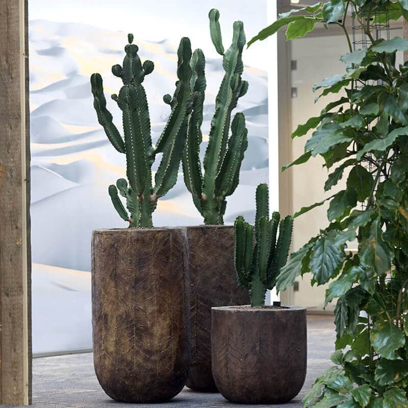 cactus in large brown pots