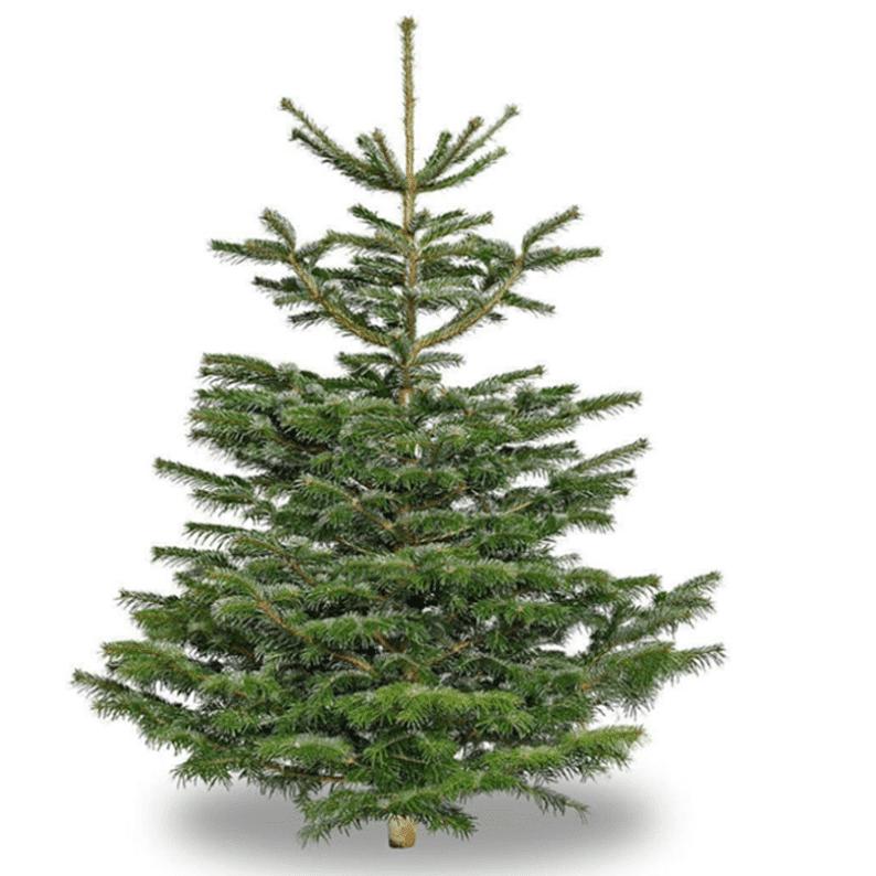 Christmas Big tree