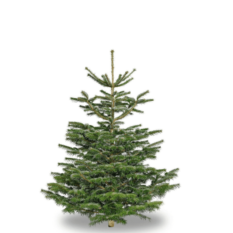 Small Nordic spruce christmas tree