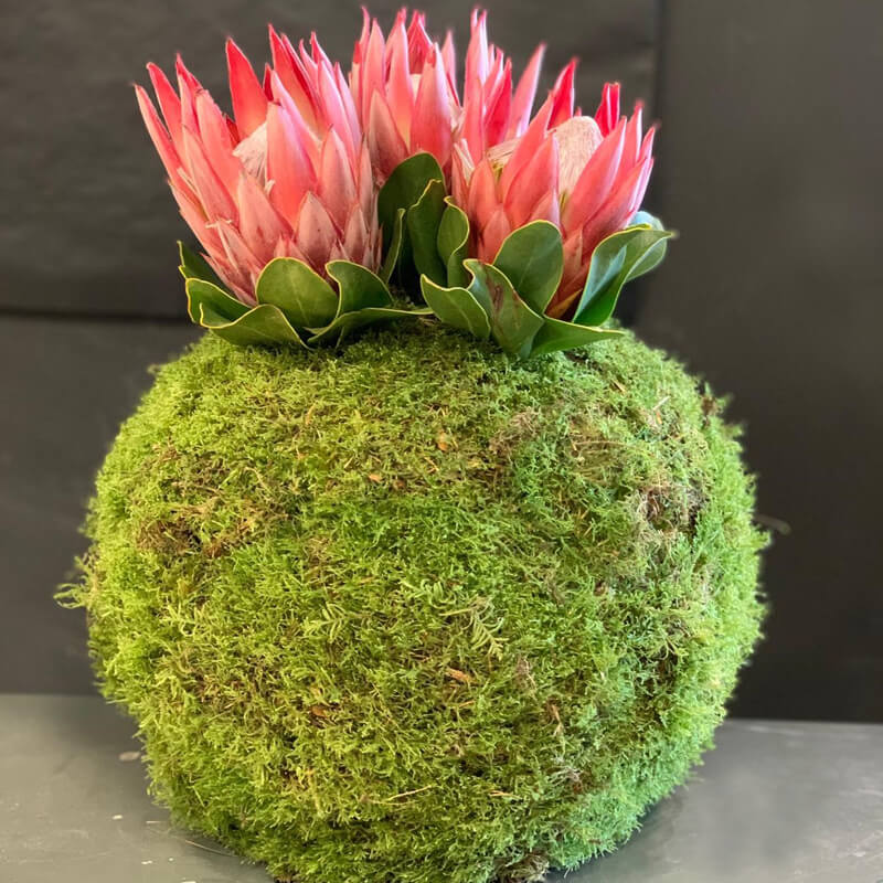 moss ball with pink protea