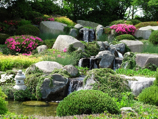 Japanese garden with pink azalea and plants