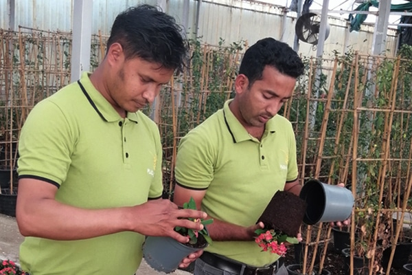 Plant experts inspecting plants