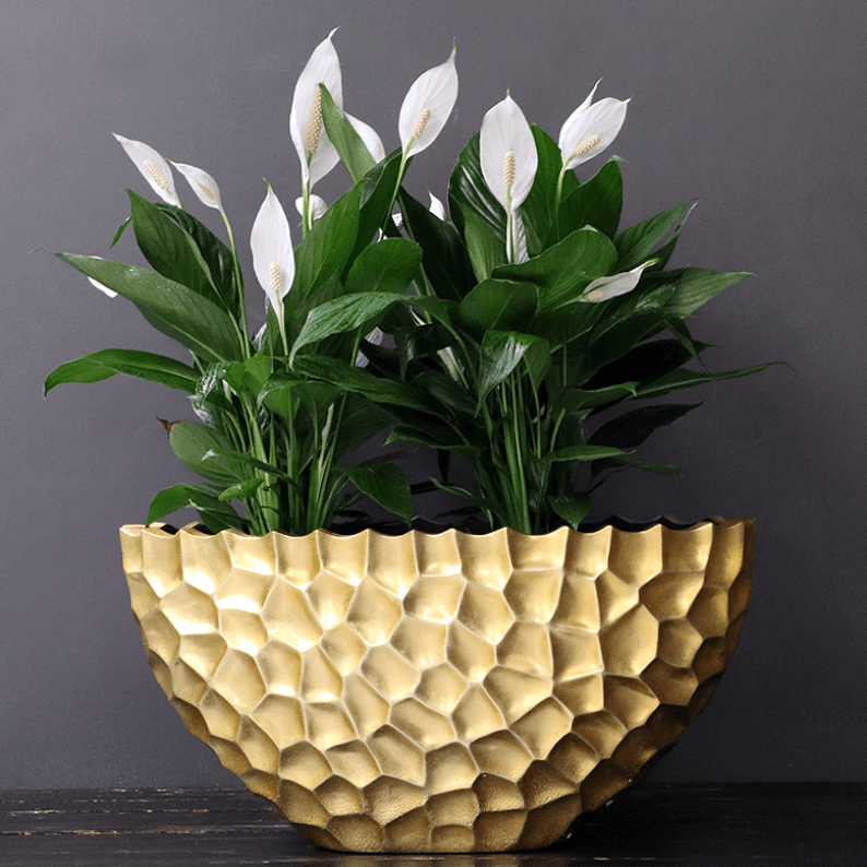 Peace Lily in a gold pot
