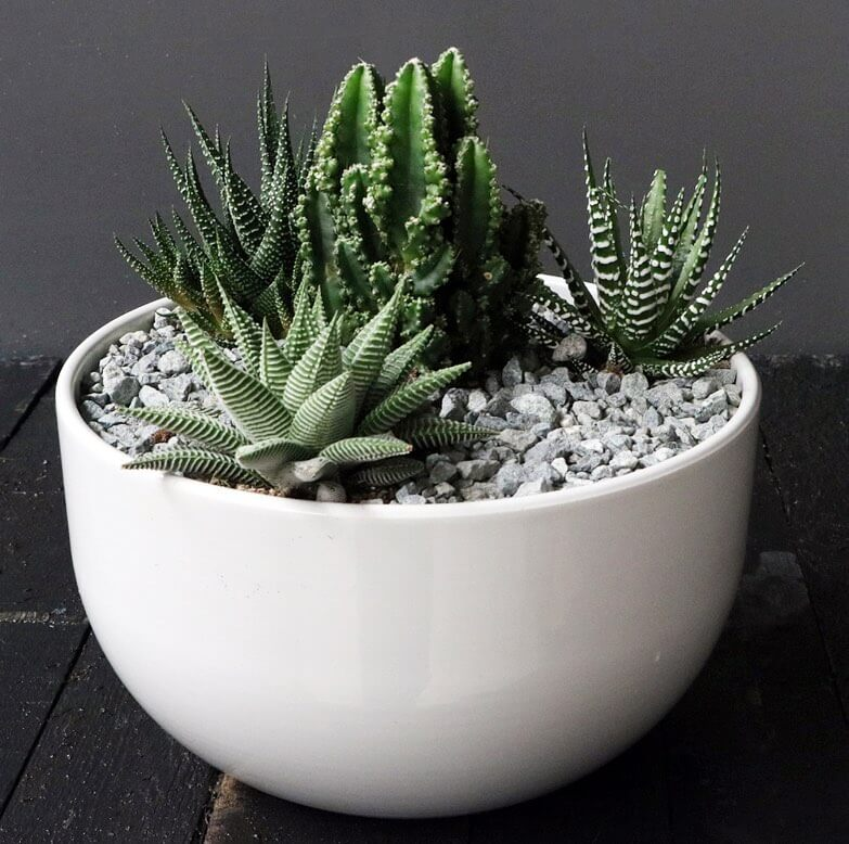 collection of succulents in a white pot