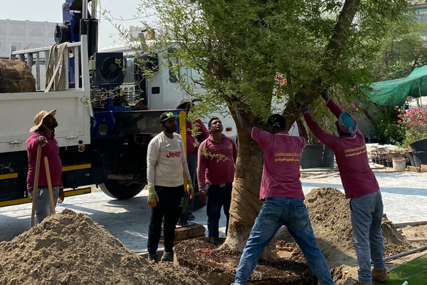 Plaza hollandi staff planting a tree