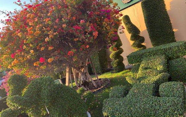 garden centre with shrubs