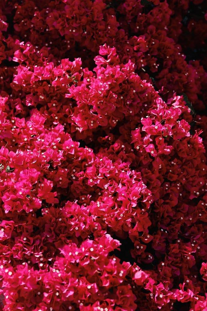 Fragrant Colourfull Garden