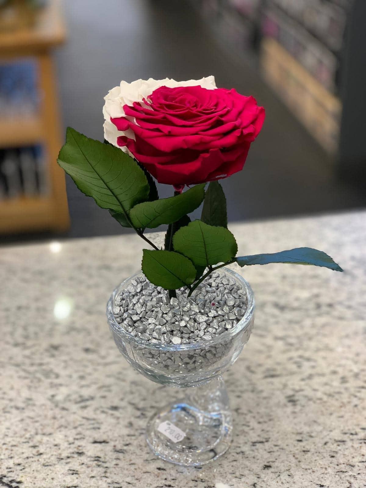 long lasting rose