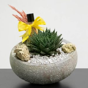 succulent with perfume