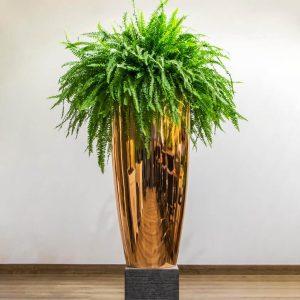 Boston fern in a gold pot