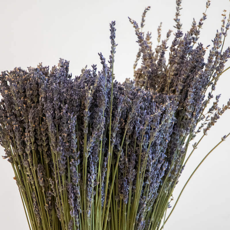Dried lavender close up
