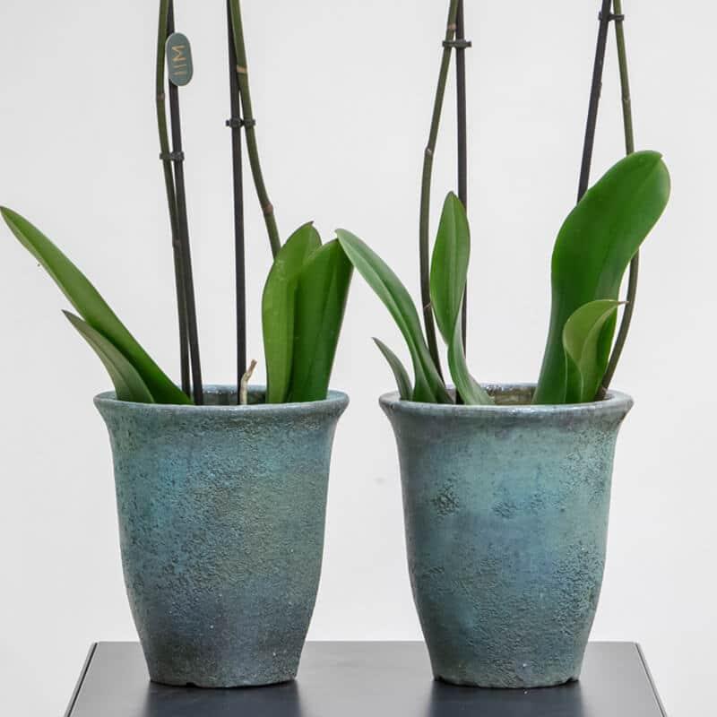 Purple orchid pots
