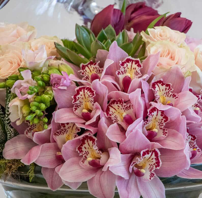 Close up of cymbidium orchids