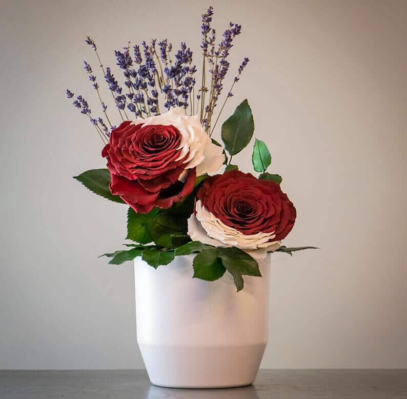 qatar national day rose amor flowers