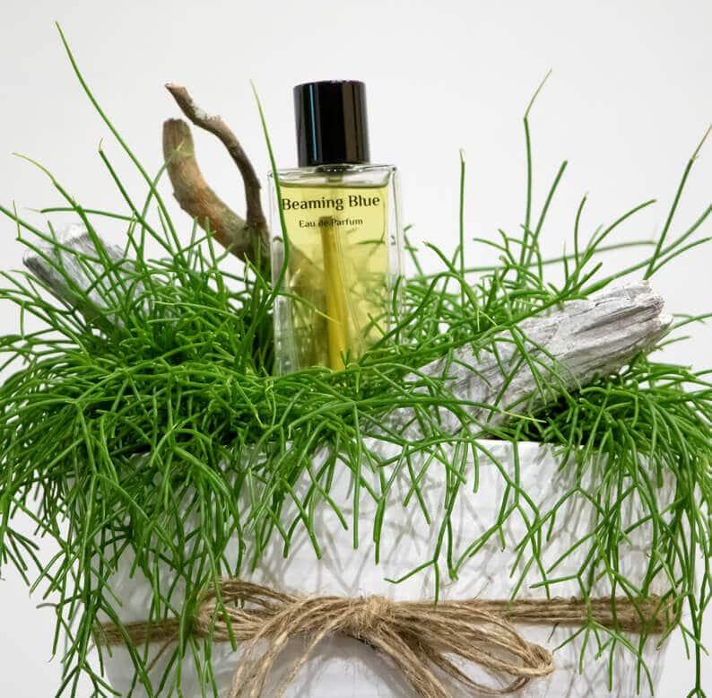 Rhipsalis and Perfume close up