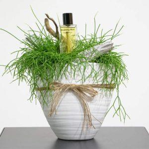 Rhipsalis and perfume