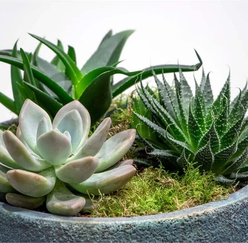 Close up of succulent garden
