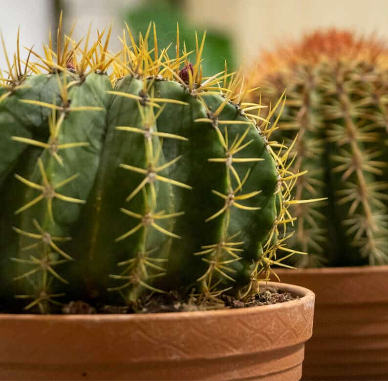 close up with cactus plants