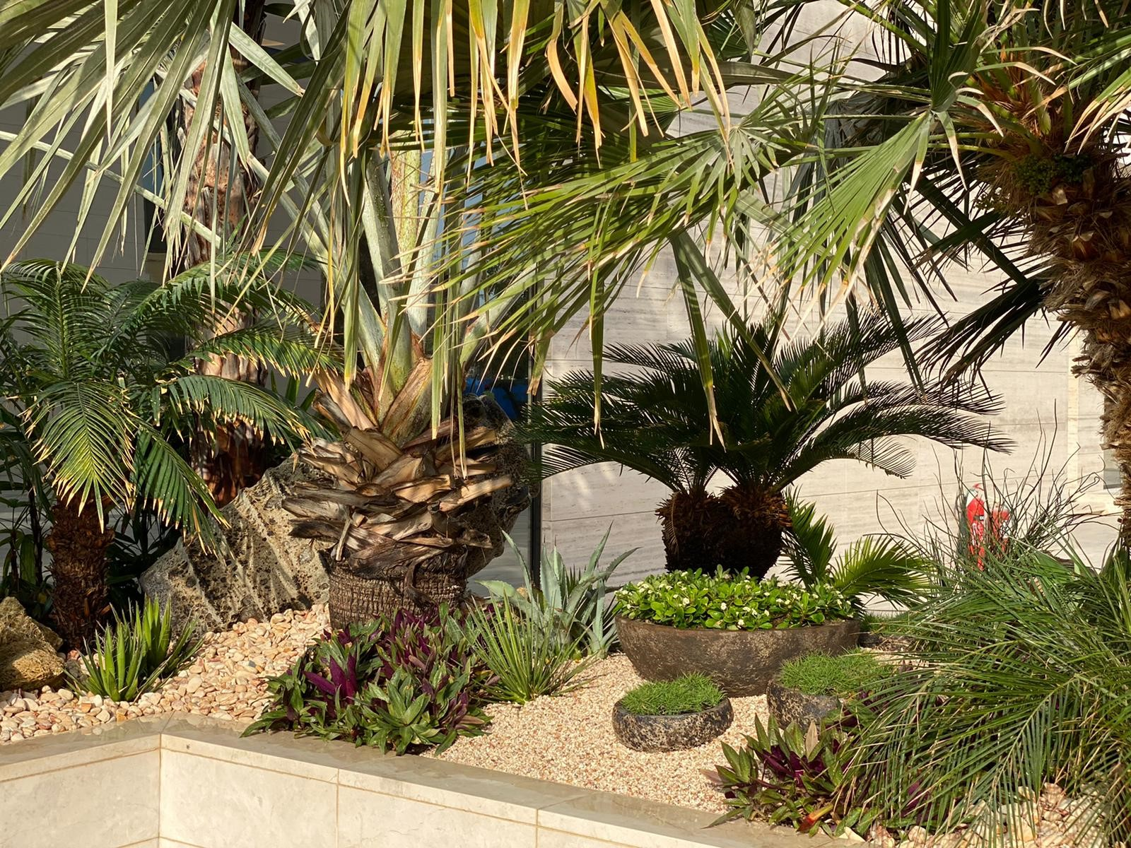 Palms, cacti and grasses