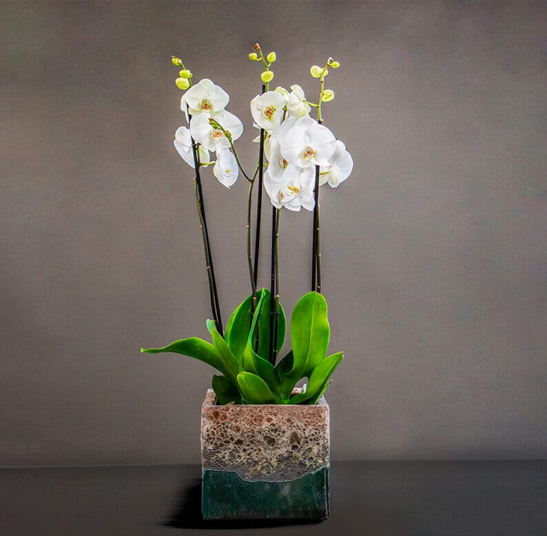 orchids in a pot
