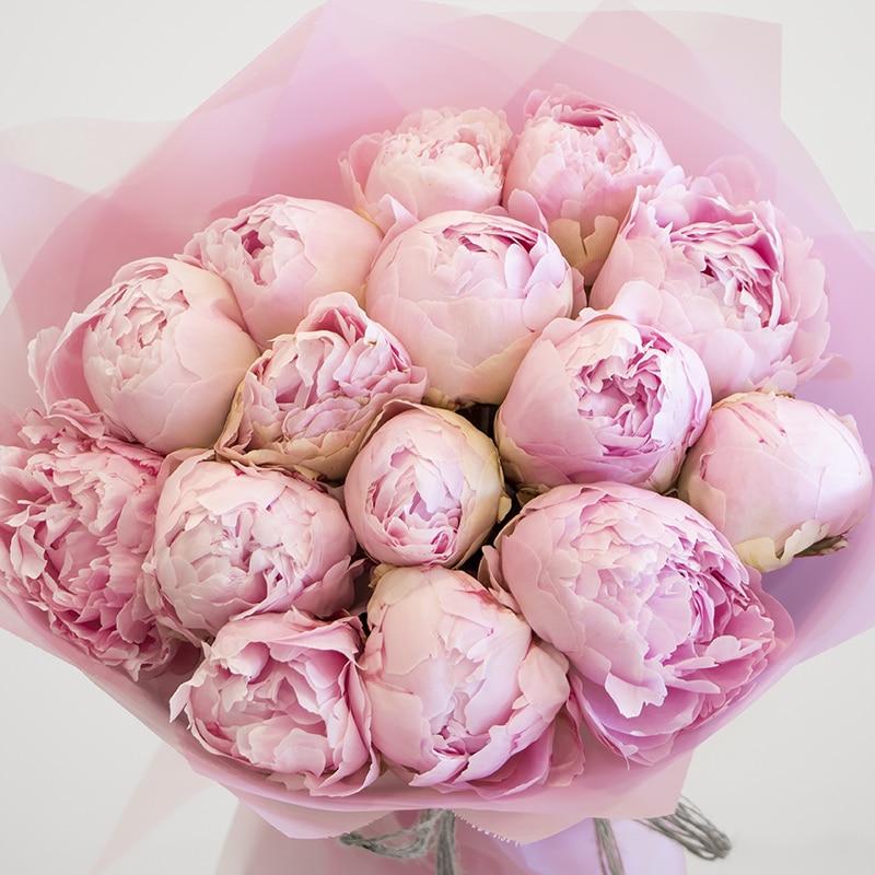 close up of pink peonies