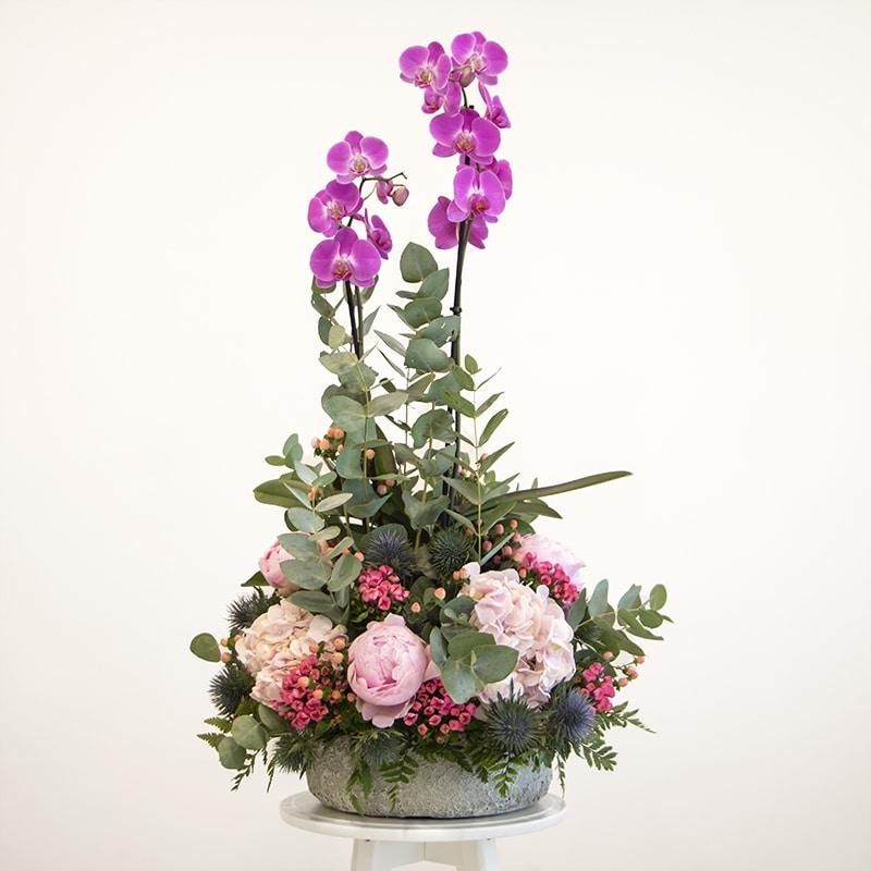 phalaenopsis flower arrangement