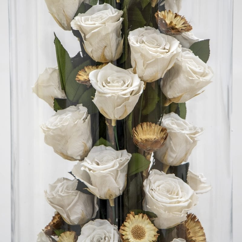 close up of preserved roses