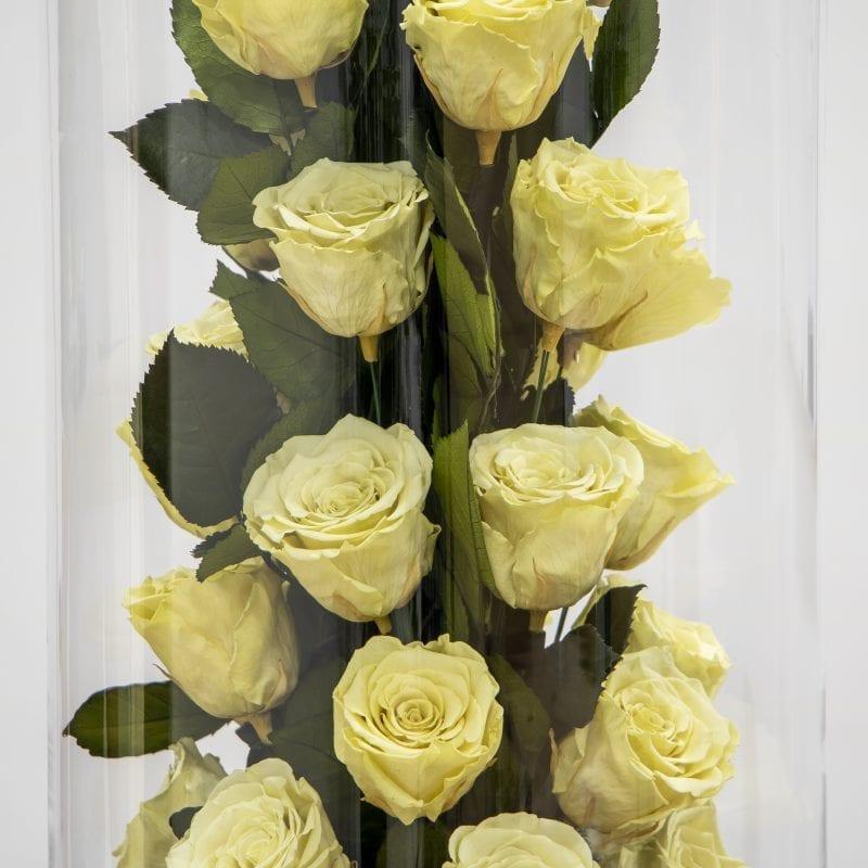 Off white rose amore design