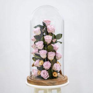 Light pink preserved roses