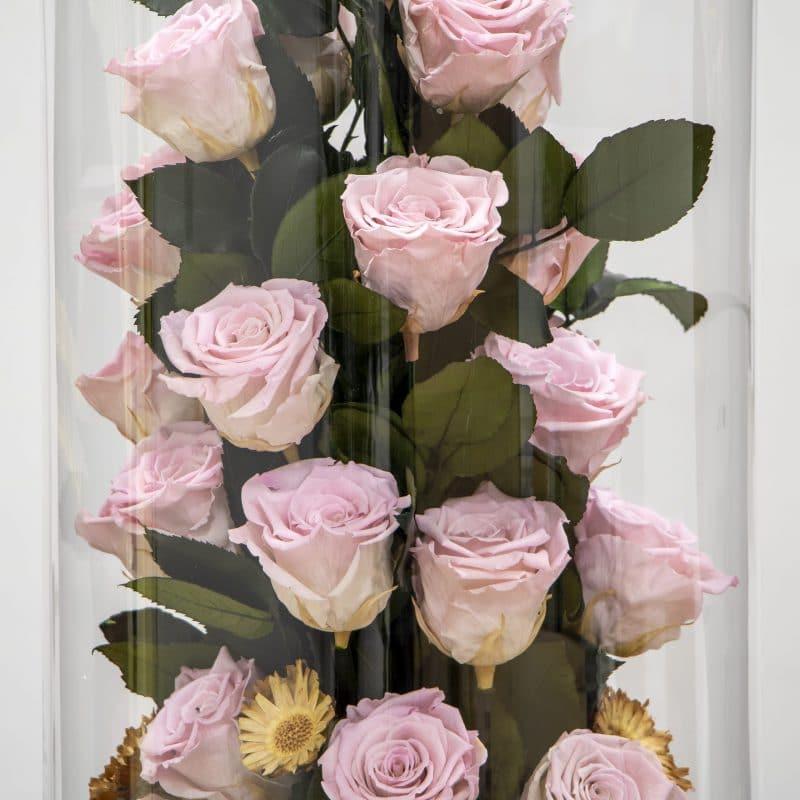 Light pink preserved roses close up