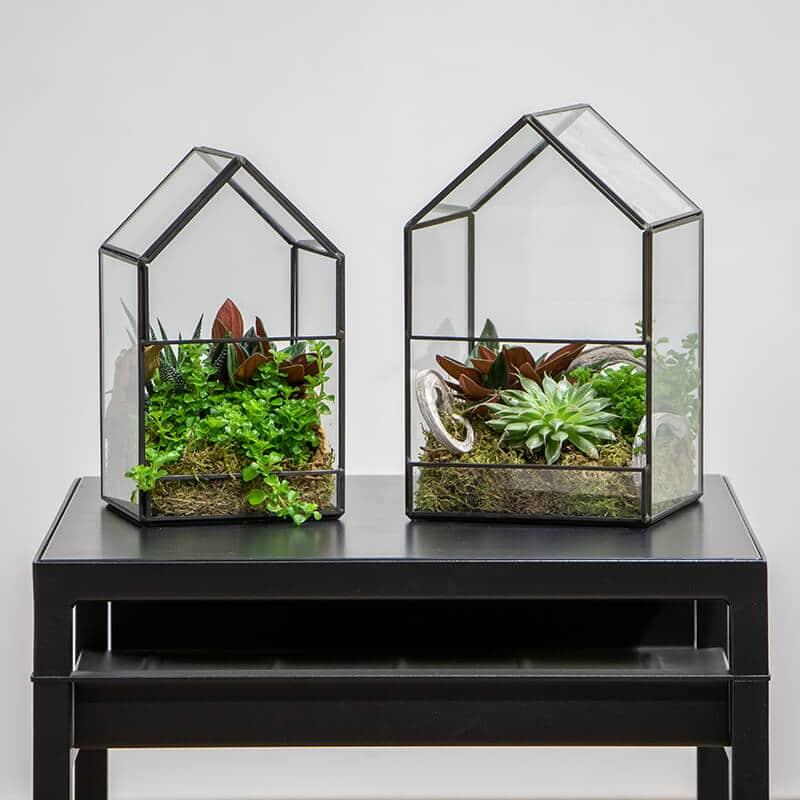 two terrariums