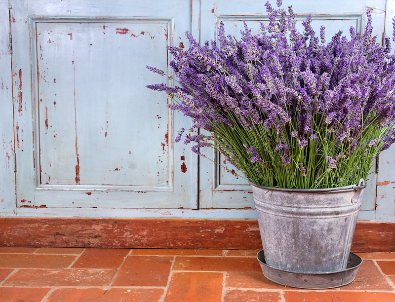 Pot of lavender outside
