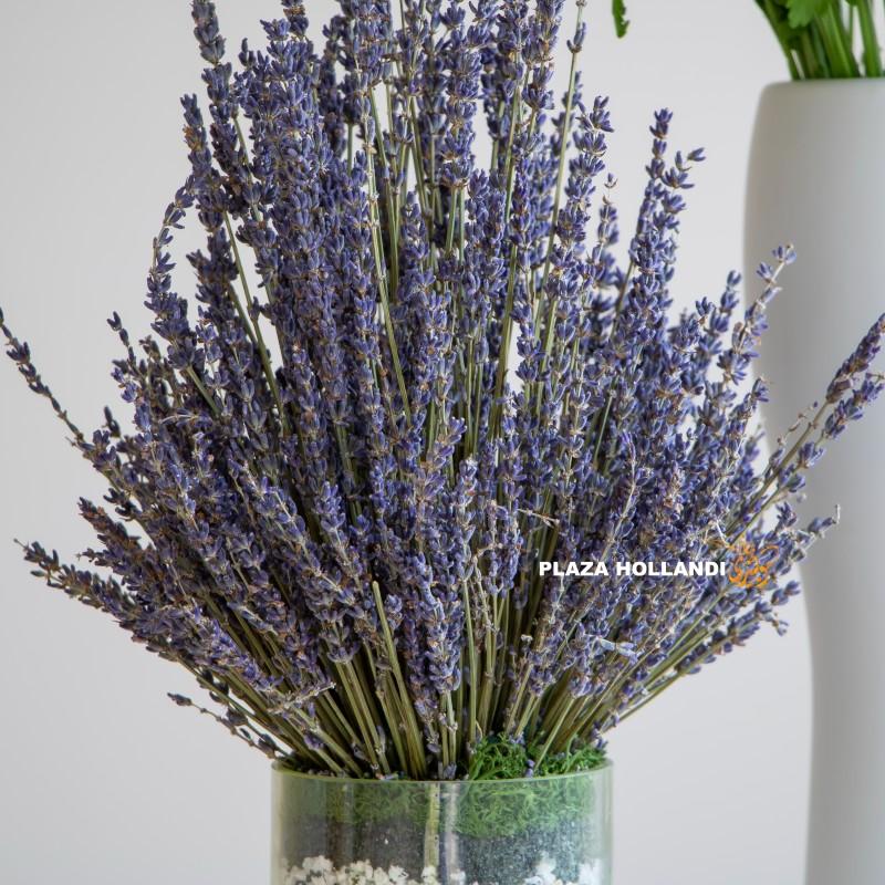 Close up of lavender
