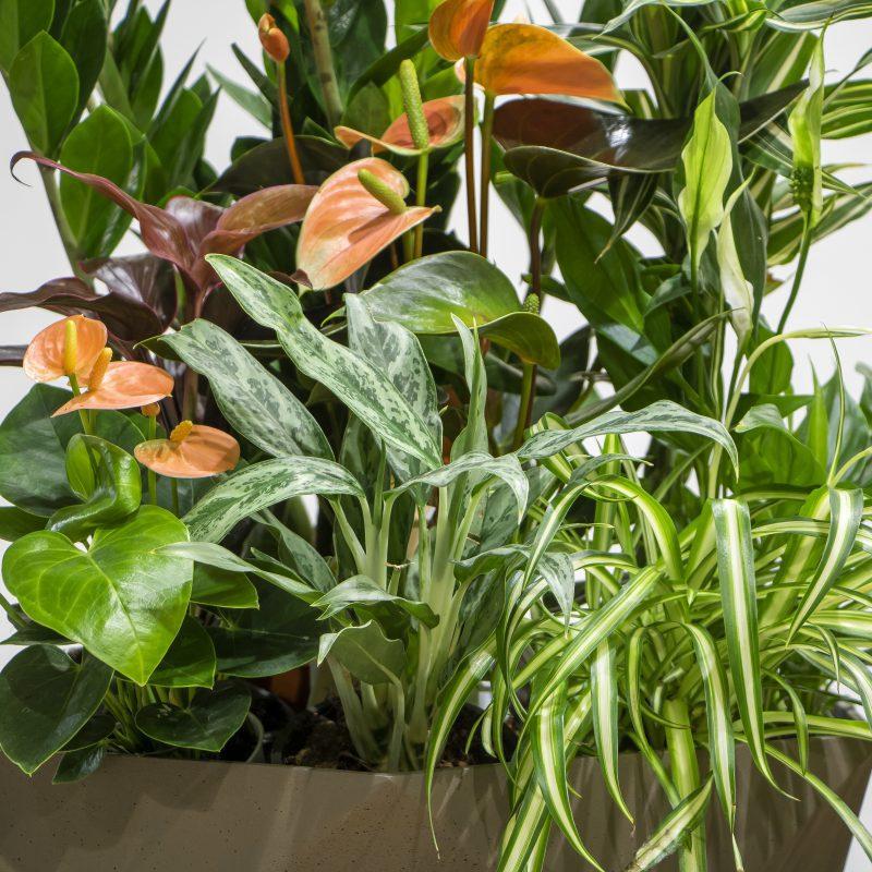 Mixed indoor Plants