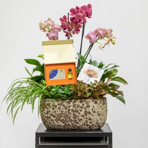 Phalaenopsis orchids in a pot with the mandarin oriental voucher