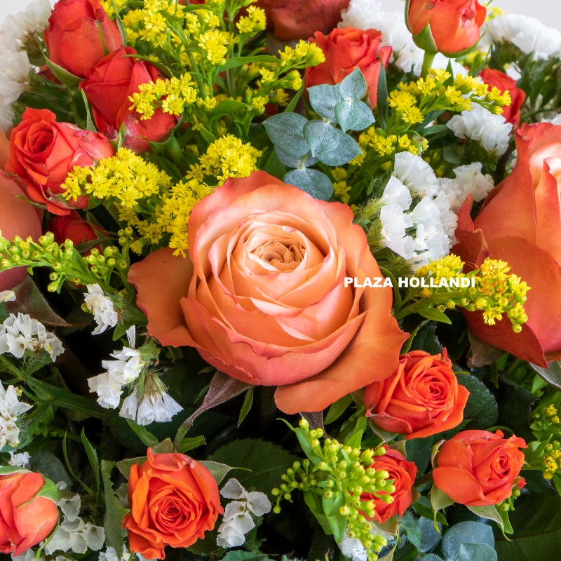 Close up of Plaza Hollandi Orange and yellow flowers