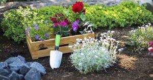 Gardening Outdoor plants