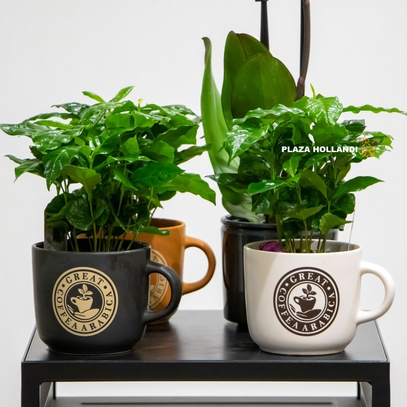 Coffee plants in a coffee cup